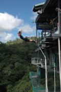 Bungy Jumping - with FREE return hotel transfers or self drive option: 25 mins drive from Cairns (*26)